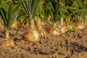 Voedselbanken en verwante organisaties in Nederland