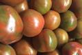 groenrode-tomaten-portr